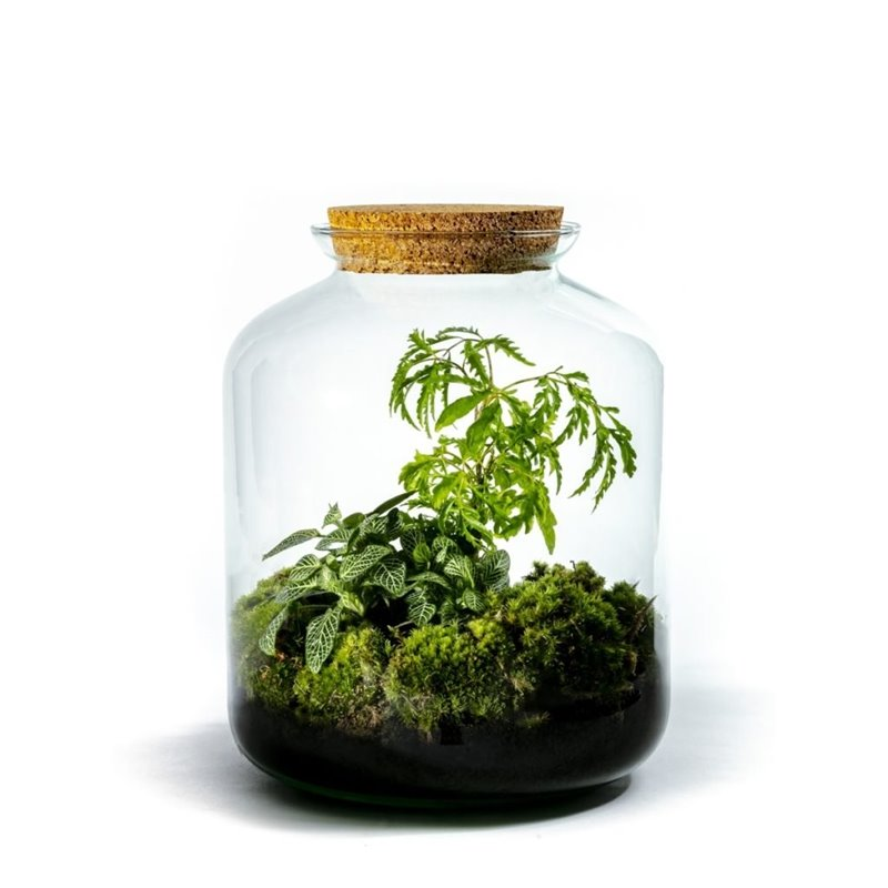 Vidar - Growing Concepts