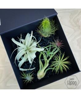 Gift box 2 - Meneertje Haas