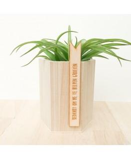 Bedankt groeien houten potje - Meneertje Haas